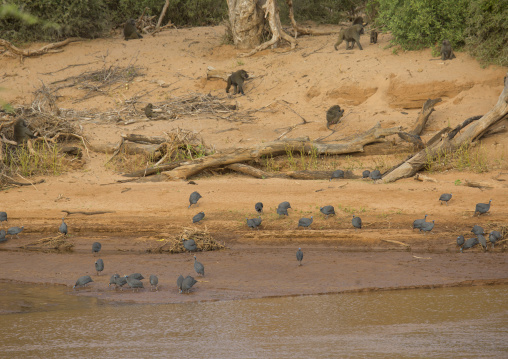 Banks of a river, Samburu county, Samburu national reserve, Kenya