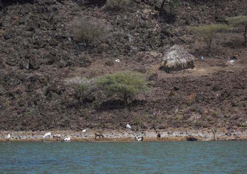 Increased water levels of lake baringo, Baringo county, Baringo, Kenya