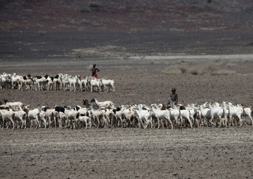 Goats and sheeps with children sheperds, Marsabit County, Chalbi Desert, Kenya