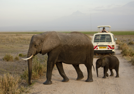 Elephant mother with her baby crossing the road in front of a tourist car, Kajiado County, Amboseli park, Kenya