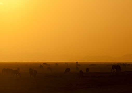 Sunset on amboseli park,Kenya