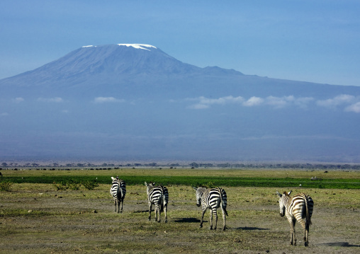 Zebras and kilimandjaro , Kenya