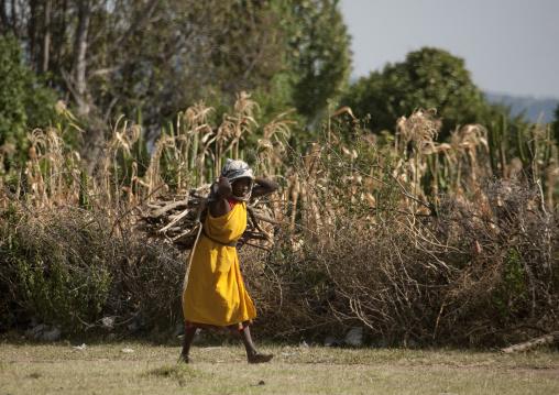 Bringing wood at home, Kenya