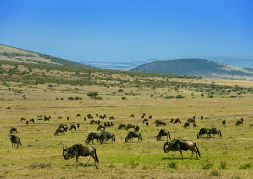 Masai mara park, Kenya