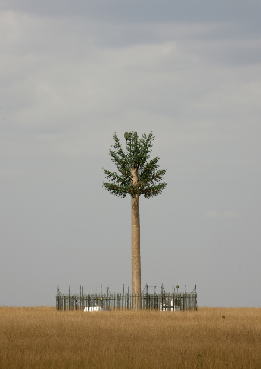 Mobile relay antenna looking like a palm tree in the savannah, Rift Valley Province, Maasai Mara, Kenya