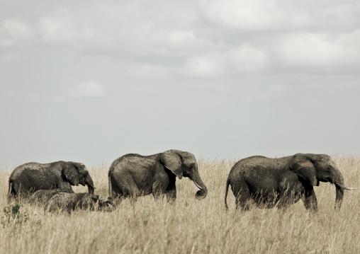 Elephant , Kenya