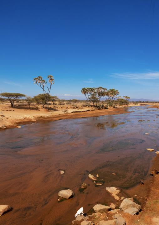 Wasoniro river with acacia trees, Laikipia County, Mount Kenya, Kenya