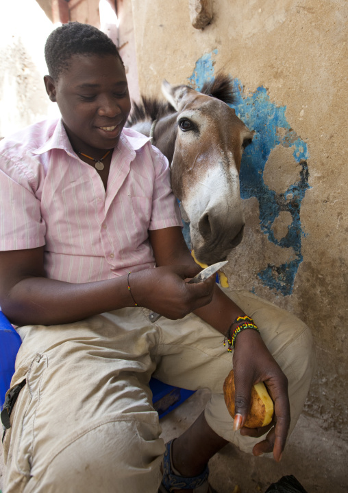 Teenage boy giving potatoe peels to wandering mule, Sitting in the street, Lamu, Kenya