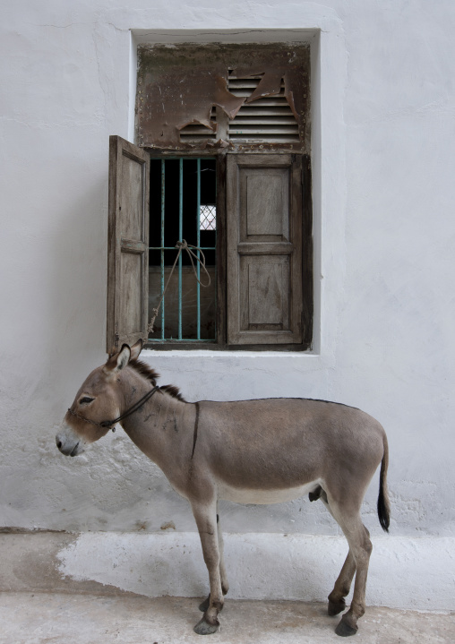 Static donkey in front of a house in lamu, Kenya