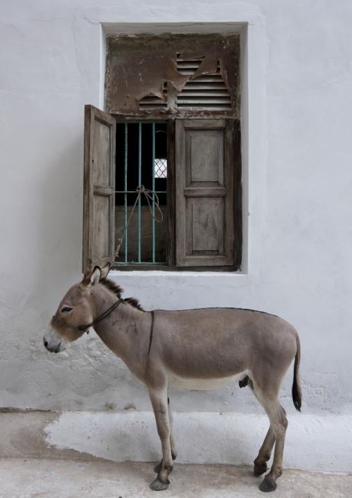 Donkey in front of a window house, Lamu County, Lamu, Kenya