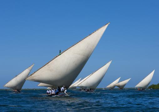 Dhow race during the Maulid festival, Lamu County, Lamu, Kenya