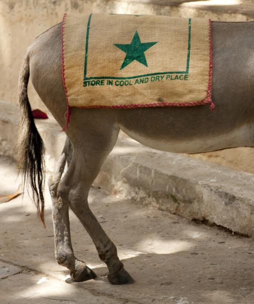 Donkey legs, Lamu county, Lamu, Kenya