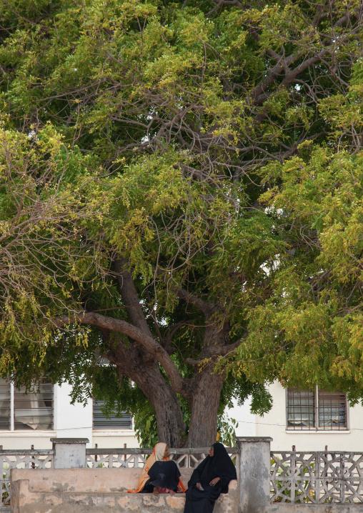 Muslim women chatting under a tree, Lamu County, Lamu, Kenya