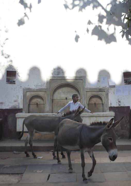 Little boy and two mules in front of the fountain, Lamu, Kenya