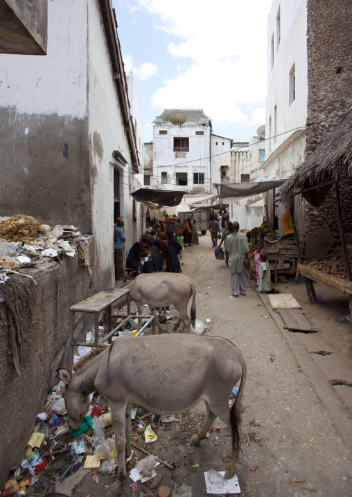 Two donkeys looking for food among trash by dirty street of lamu kenya