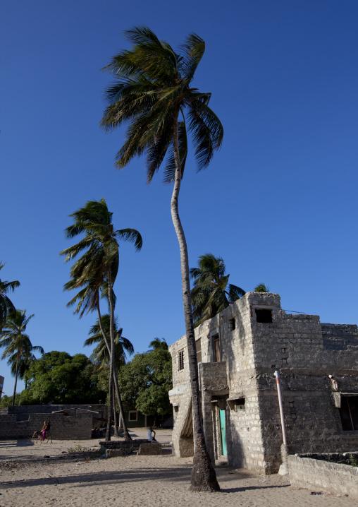 A tall palm tree outside the mosque, Lamu, Kenya