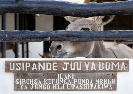 The donkeys hospital, Lamu County, Lamu, Kenya