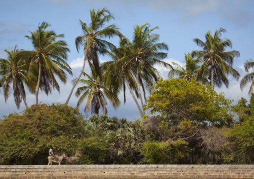 Kenyan man riding a donkey along palm trees, Lamu County, Shela, Kenya