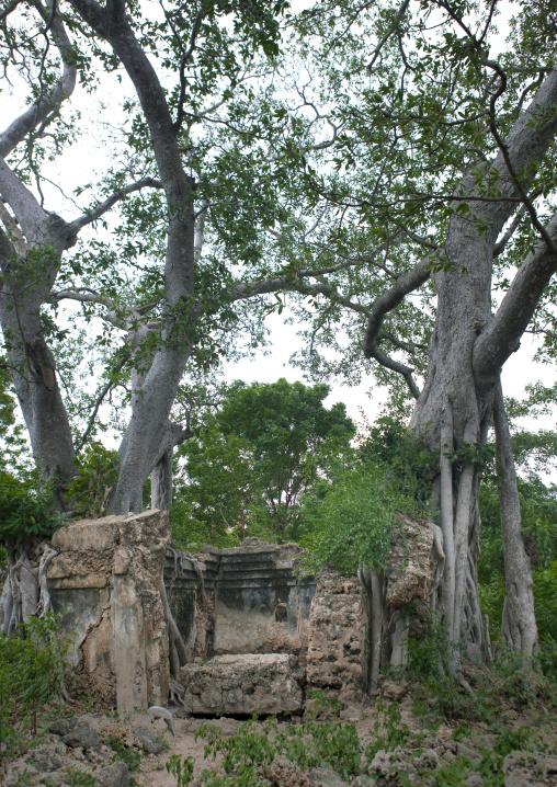 Ruin, Among the trees, Pate island, Lamu, Kenya