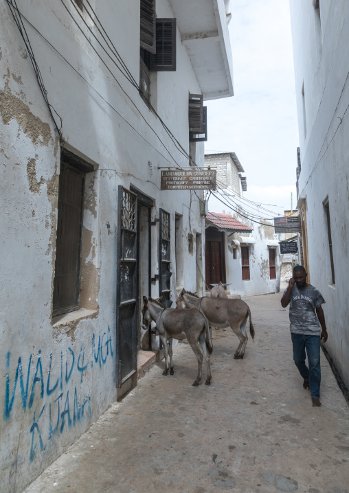 Kenyan man speaking on the phone in the street passing in front of donkeys, Lamu county, Lamu town, Kenya