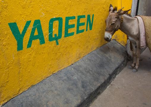 Donley standing in front of a yellow wall, Lamu county, Lamu town, Kenya