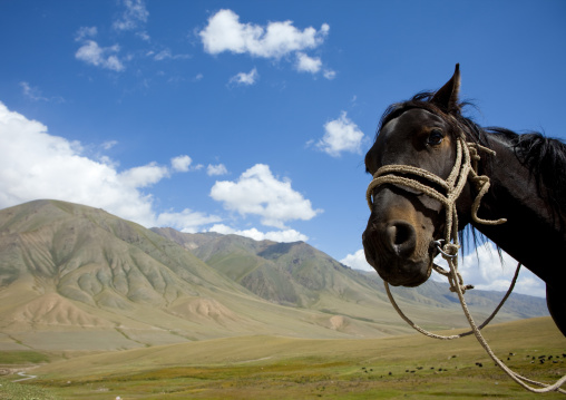Horse In Front Of The Mountains On The Road To Jaman Echki Jailoo, Kyrgyzstan