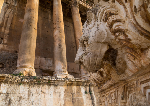 Lion sculpture in front of the temple of Bacchus in the archaeological site, Beqaa Governorate, Baalbek, Lebanon
