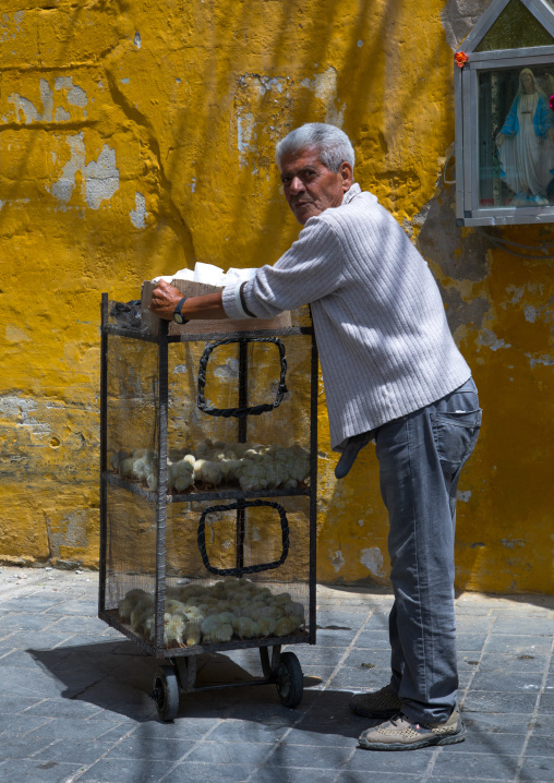 Old man selling chicks in the street, South Governorate, Tyre, Lebanon