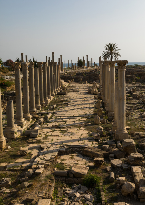 Roman road in al-Mina archaeological site, South Governorate, Tyre, Lebanon