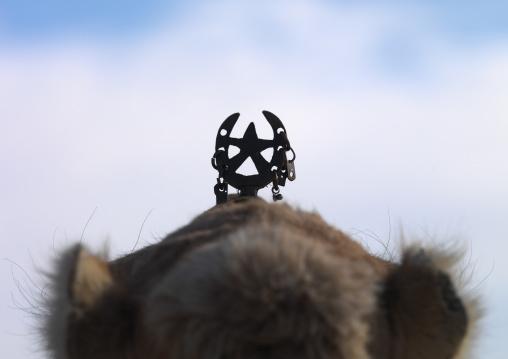 Camel head with decoration, Tripolitania, Ghadames, Libya