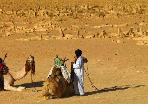 Camels in a cemetery, Tripolitania, Ghadames, Libya