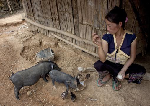 Hmong minority woman feeding pigs, Muang sing, Laos