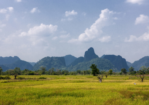 Rice fields, Vientiane, Laos