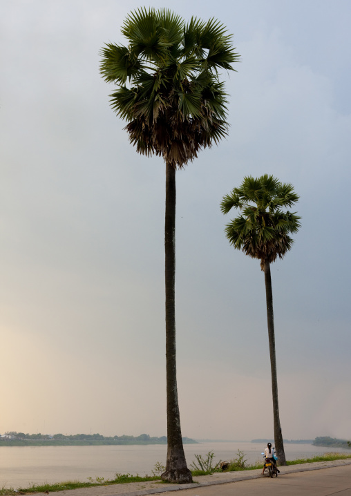 Palm trees on mekong river, Thakhek, Laos