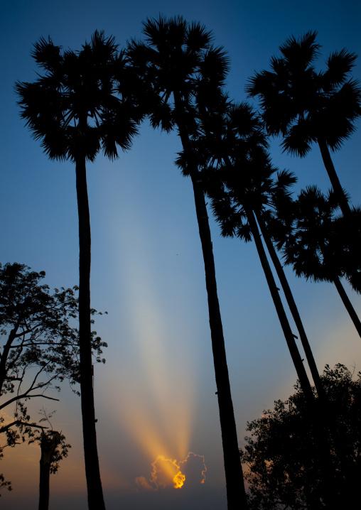 Sunset over palm trees, Savannakhet, Laos