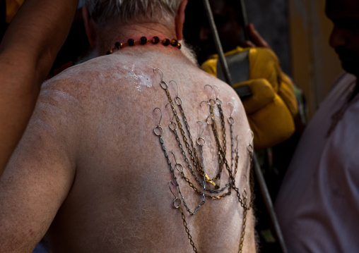 Hindu Devotee In Thaipusam Religious Festival In Batu Caves With His Back Pierced With Hooks And Chains, Southeast Asia, Kuala Lumpur, Malaysia