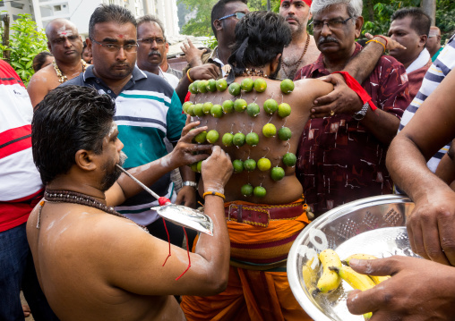 A Pierced Devotee Laden With Lemons On His Back During The Thaipusam Hindu Festival At Batu Caves, Southeast Asia, Kuala Lumpur, Malaysia