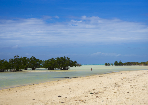 Sea And Mangrove, Quirimba Island, Cabo Delgado Province, Mozambique