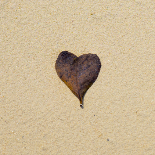 Heart Shped Leaf, Quirimba Island, Cabo Delgado Province, Mozambique