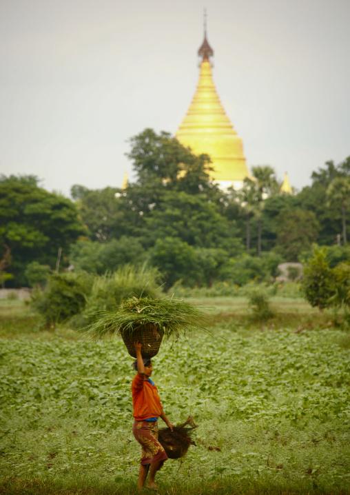 Woman Working In A Paddy Field In Innwa, Myanmar