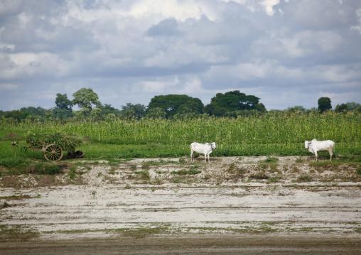 Irrawaddy River Banks Daily Life, Myanmar
