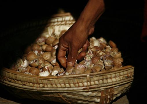 Betel nuts, Bagan, Myanmar