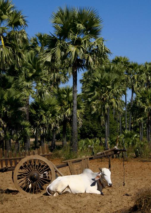 Ox Cart, Bagan, Myanmar