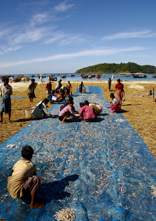 Women putting dried fish in ngapali, Myanmar