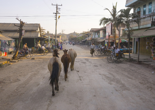 Horses In The Street, Mrauk U, Myanmar