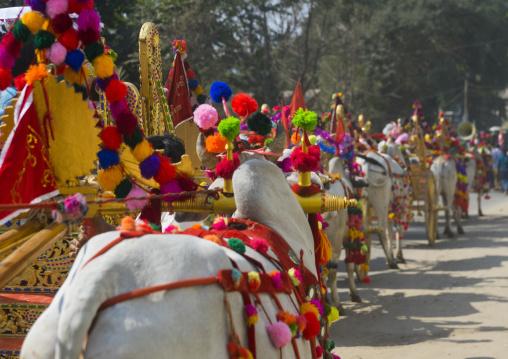Decorated Ox Cart During A Novice Parade, Bagan,  Myanmar