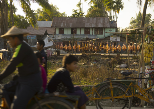 Caught fish filletted and hanging out to dry, Sittwe, Myanmar