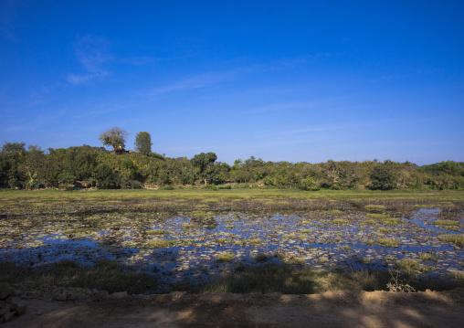 Lake With Lotus, Mrauk U, Myanmar