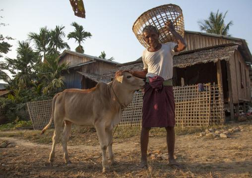 Rohingya Man With An Ox, Thandwe, Myanmar