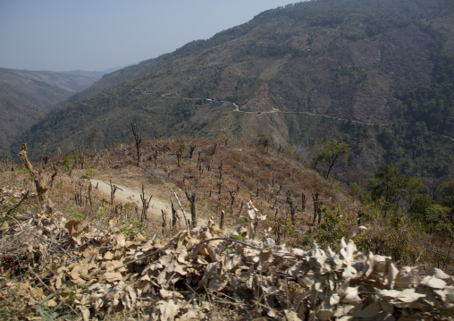 After A Forest Fire, Mindat, Myanmar